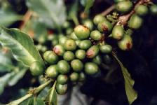 coffe_beans dans Astuces Culinaires